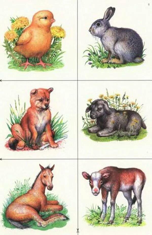 или, предметные картинки животным овощи это