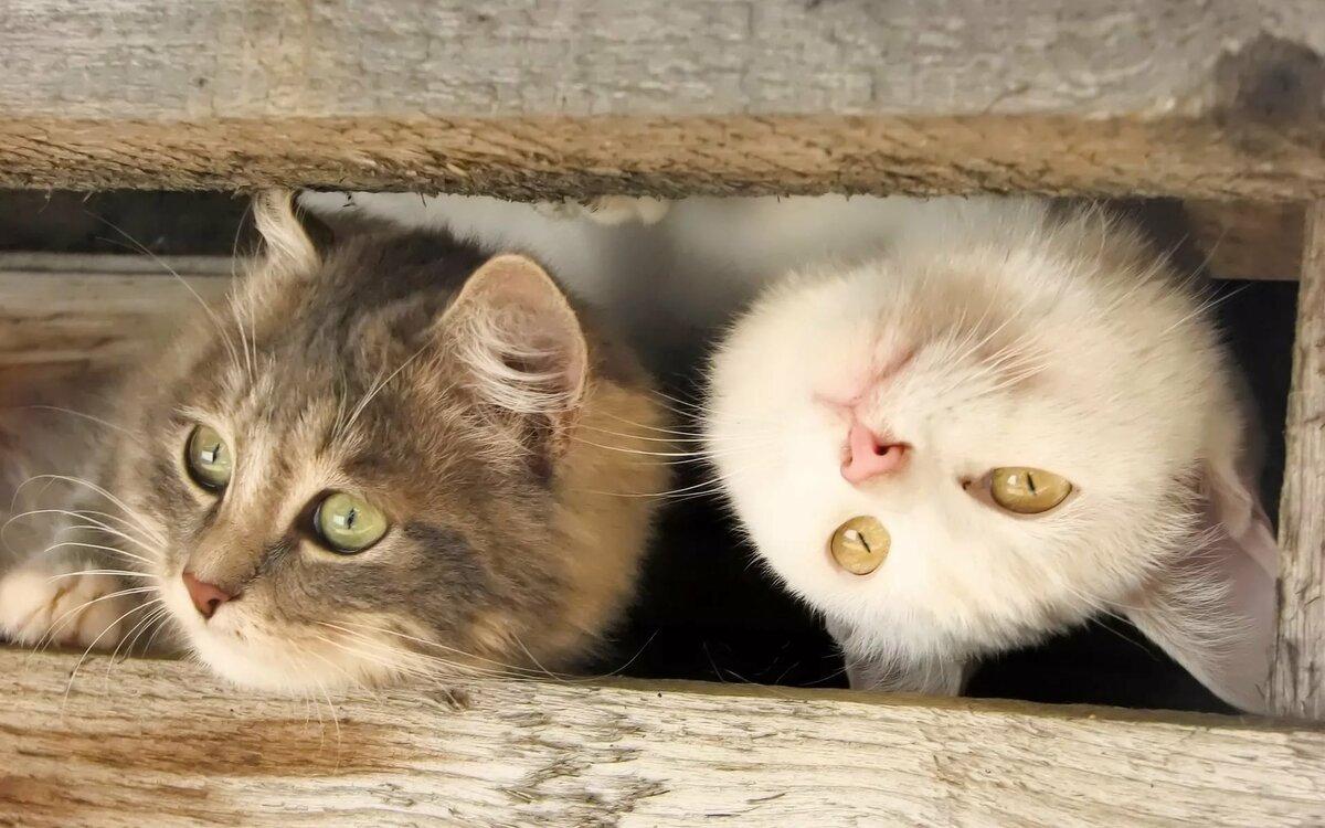 Смешные картинки животных приколы кошки