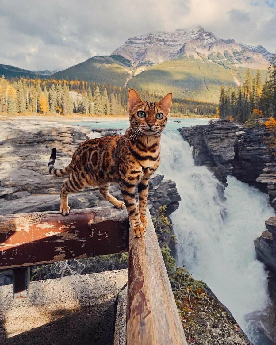 картинки с котами в горах фотоаппарат