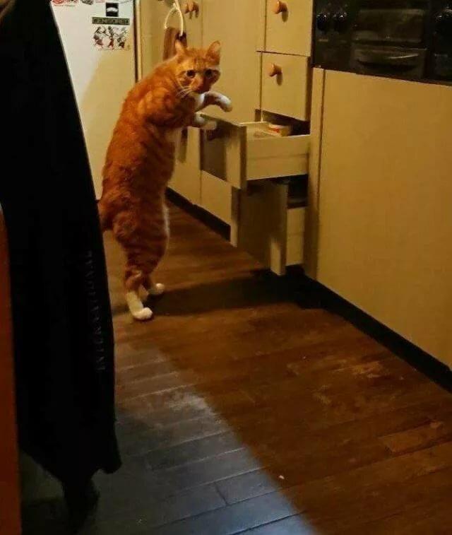 Про рабочую, смешные картинки котов и кошек смех до слез