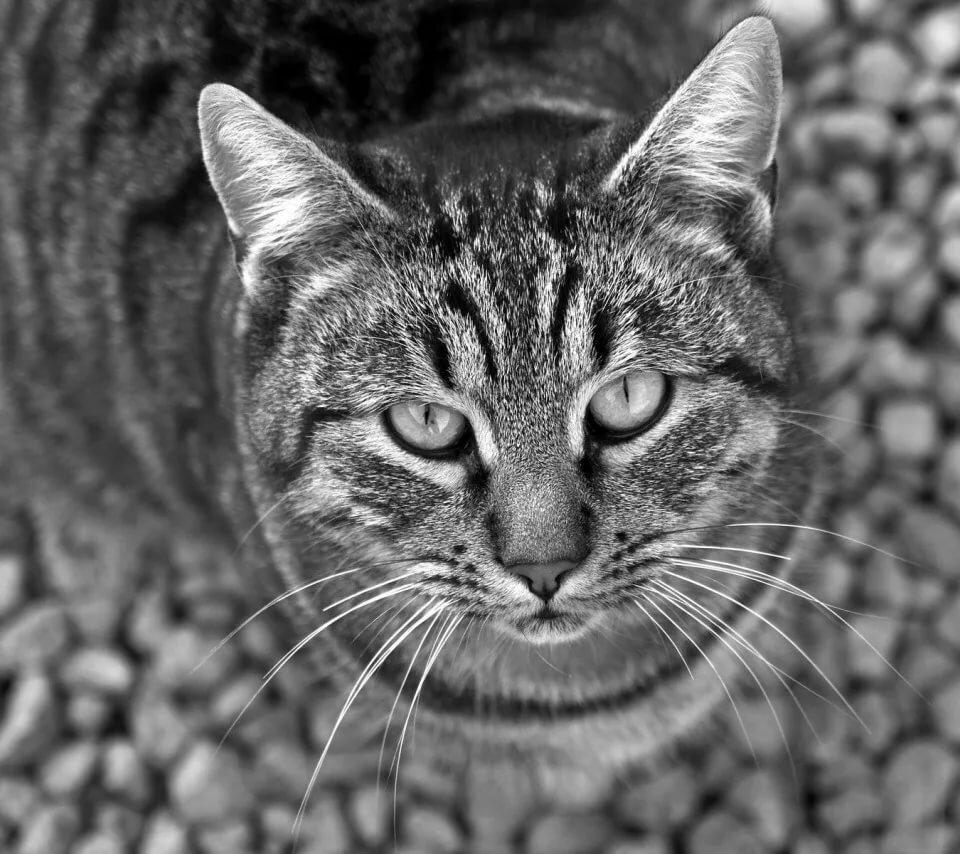 Черно белые картинки котэ