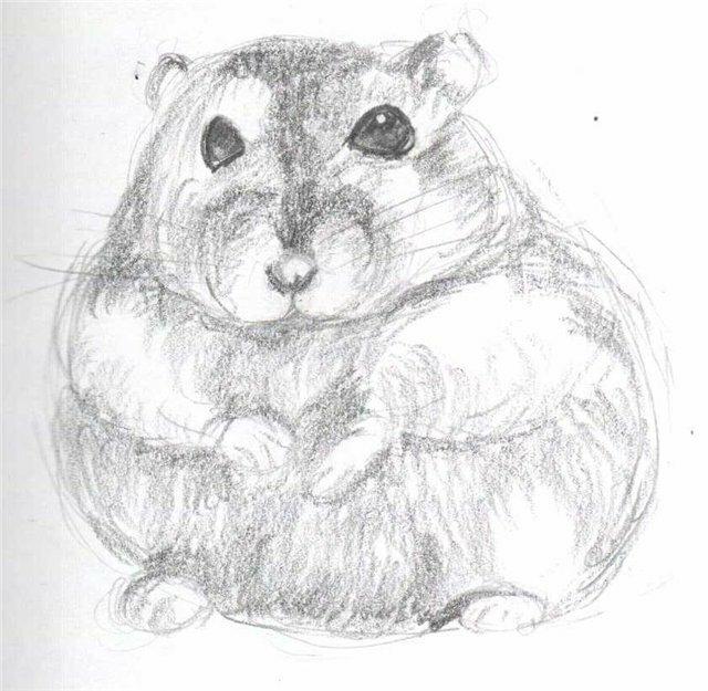 Рисунки для срисовки хомяк карандашом