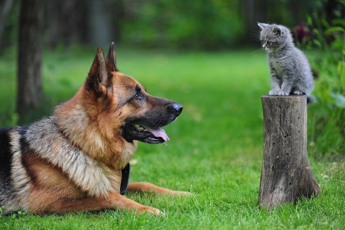 суперские картинки животных
