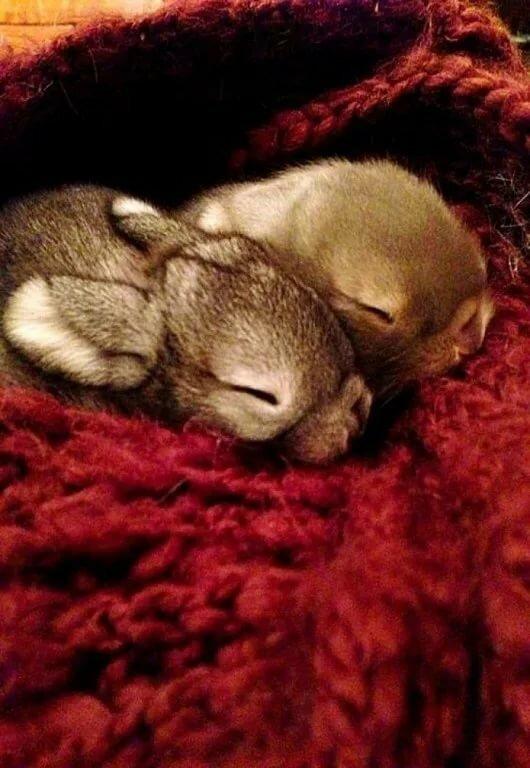 полным спит зайка с белкой фото шведский