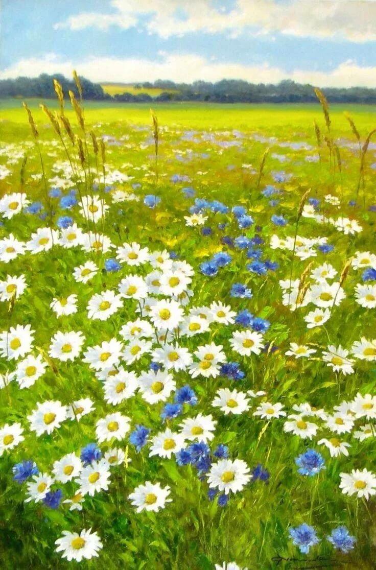 Вконтакте, луговые цветы открытки