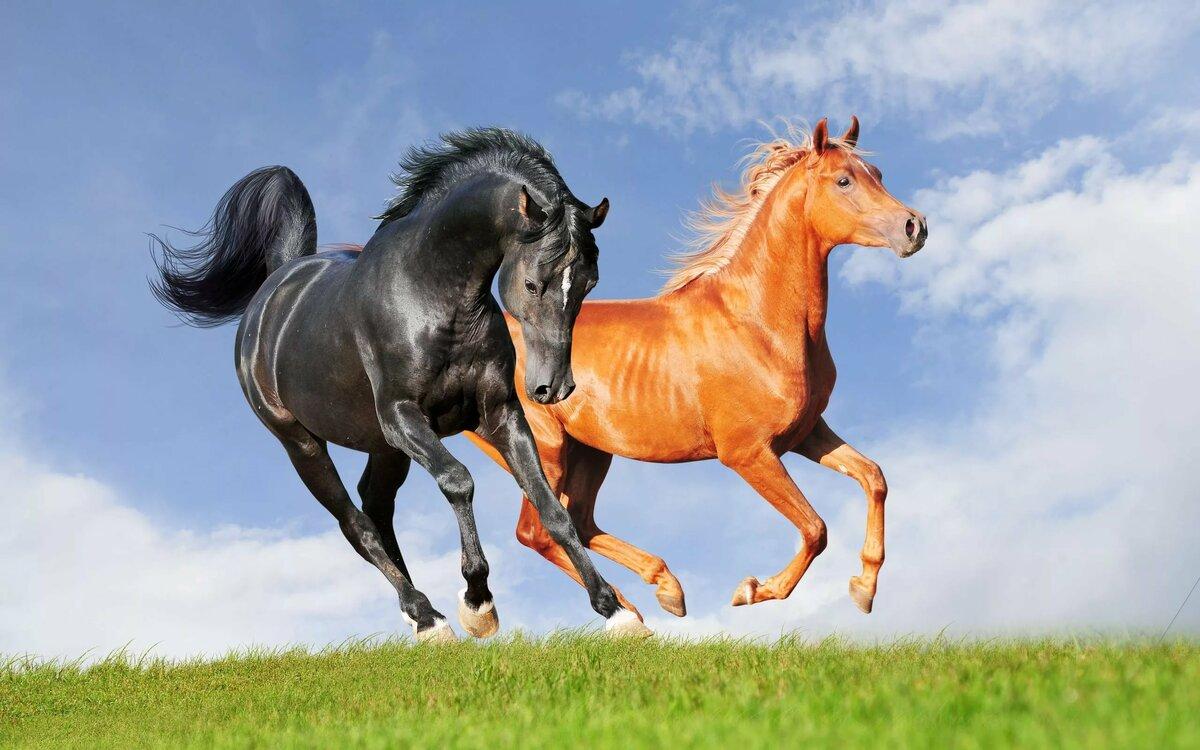 Зодиака весы, картинка лошадей в высоком качестве