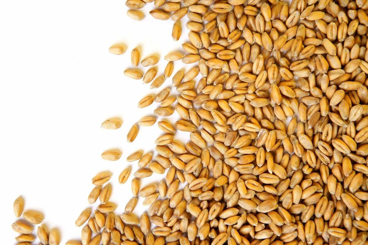 Пшеница семена картинка
