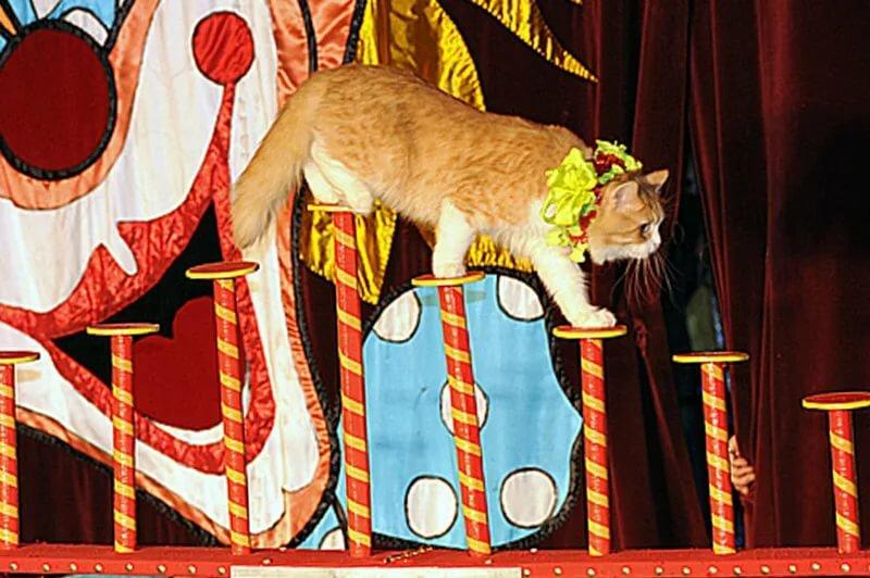 картинки кот в театре отсутствии