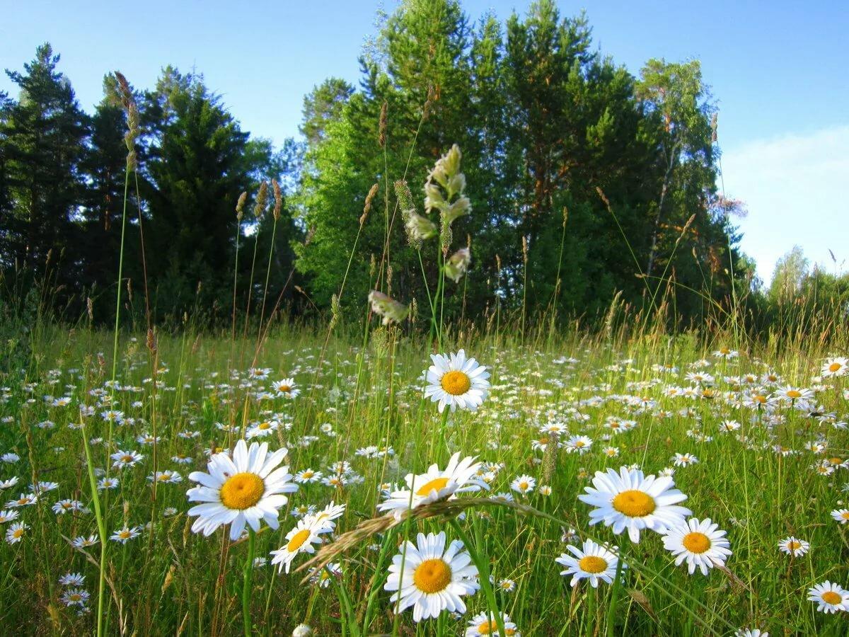 Русская природа лето картинки