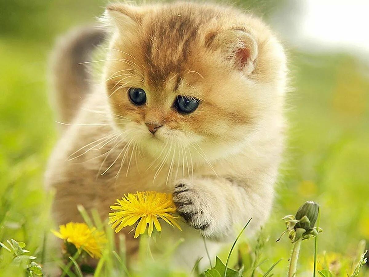 картинки котенок солнышко павильон