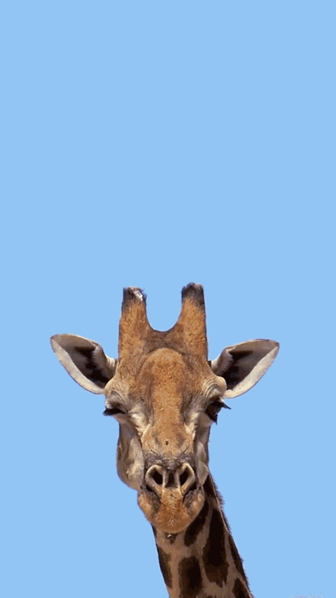 Картинки анимация животные приколы, картинках статусы открытки
