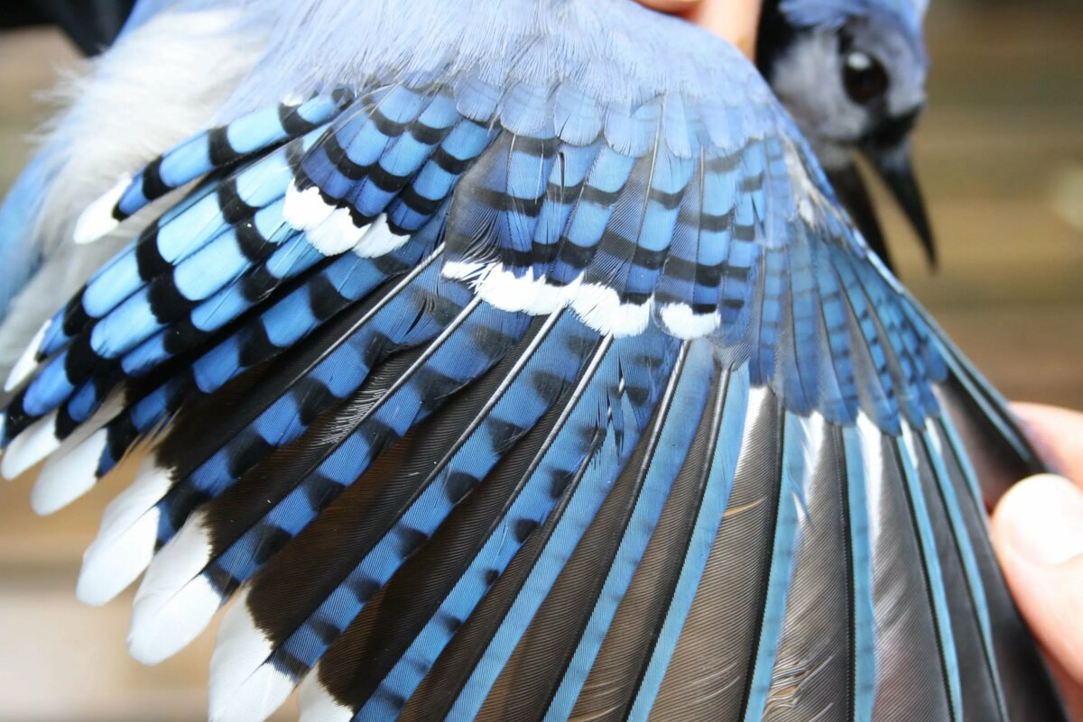 крыло птицы фотографии окончания