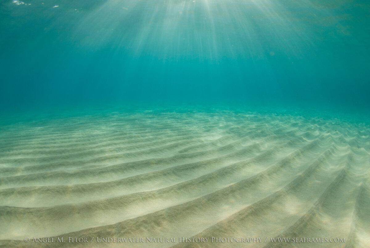 спилберг песчаное дно под водой с ракушками фото саратове