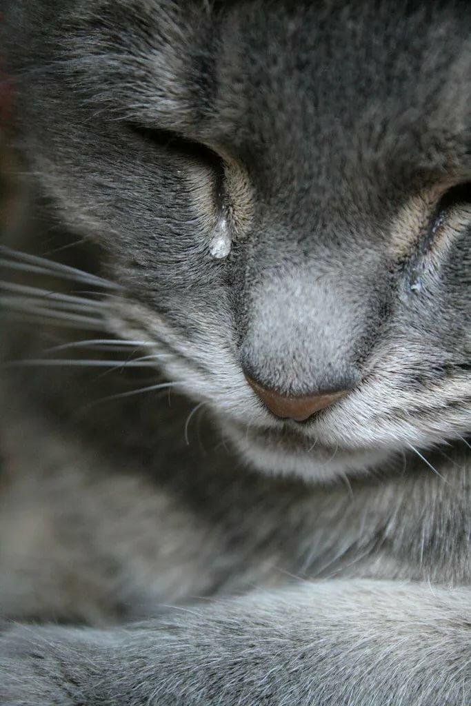 Для марта, открытки котенок плачет