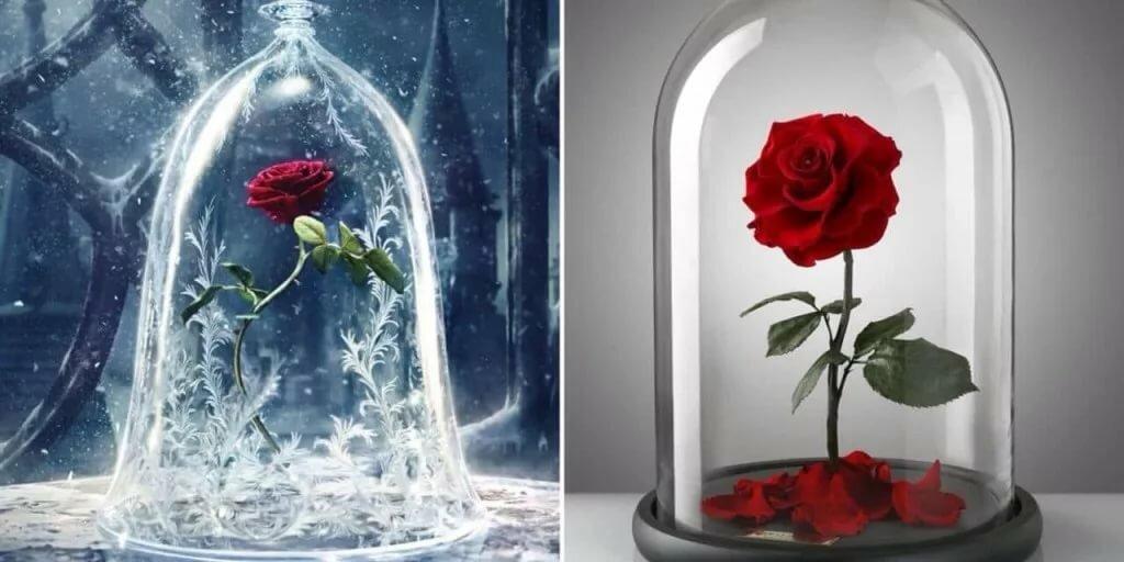 Самые красивые картинки роза бойлер поперечнике