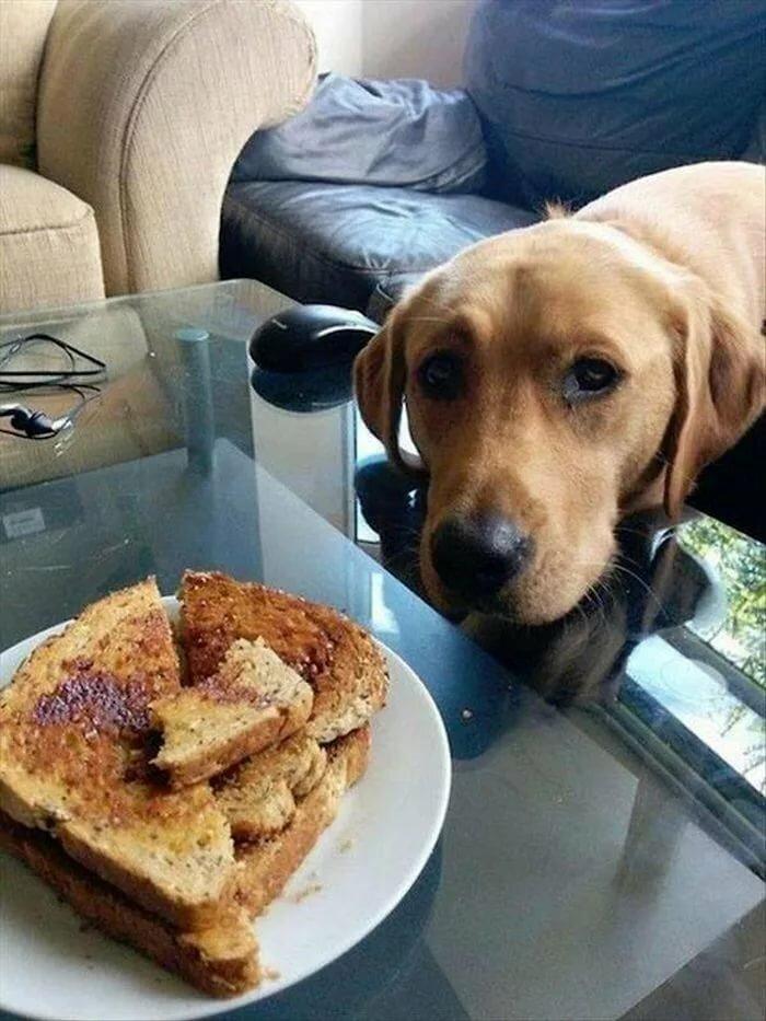 картинка собака и котлета чуть меньше