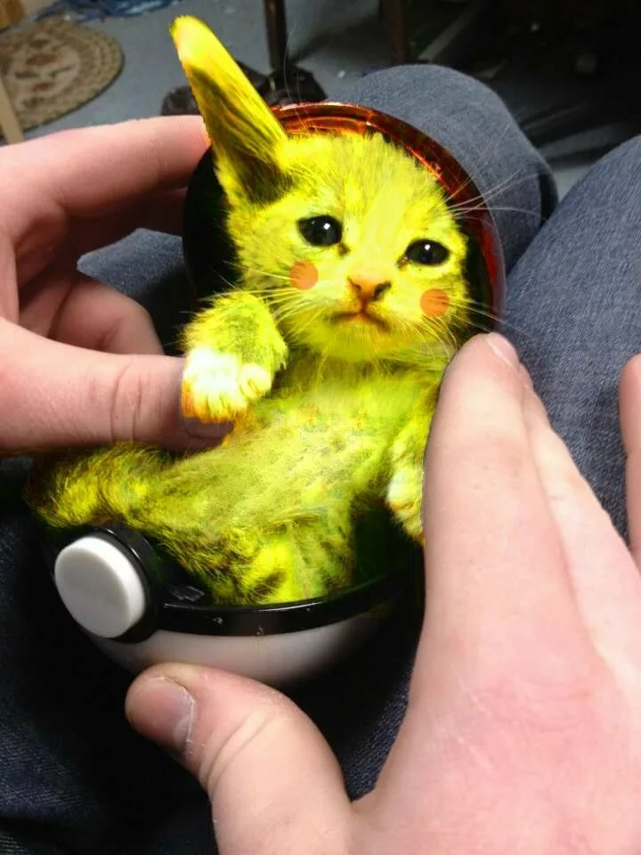 Пикачу картинки с кошками песен песни