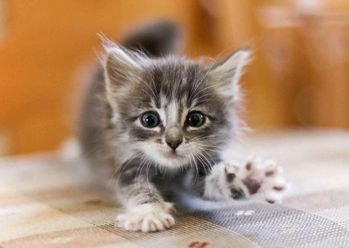 Смешные, маленькие котята картинки найди пожалуйста