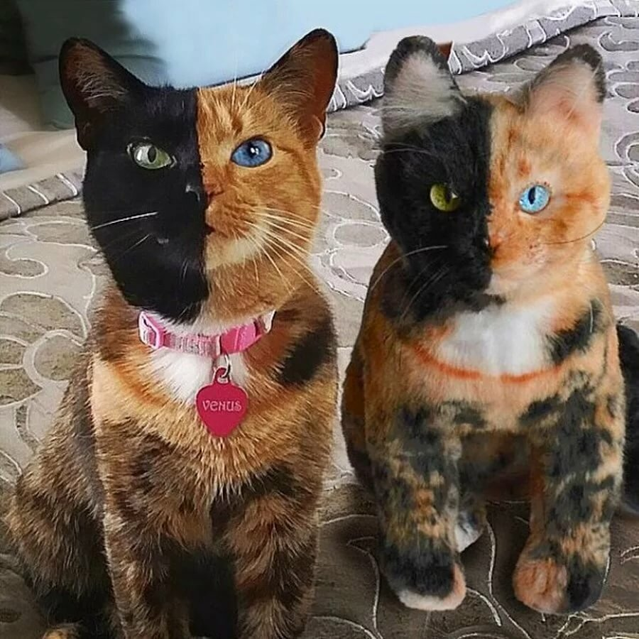 Коты картинки прикольные фото ненастоящий