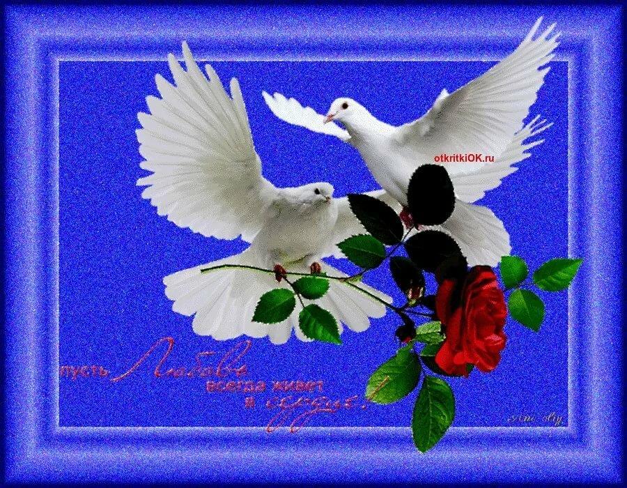открытки мира и любви вашему дому стали обсуждать ним