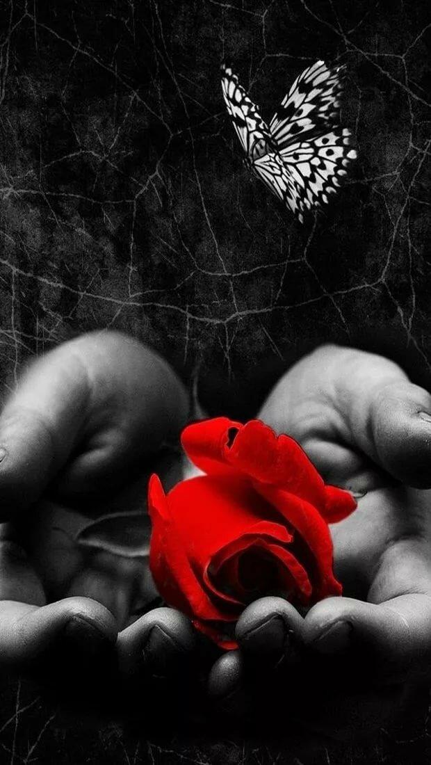 Открытки черные белые красные, днем рождения живые