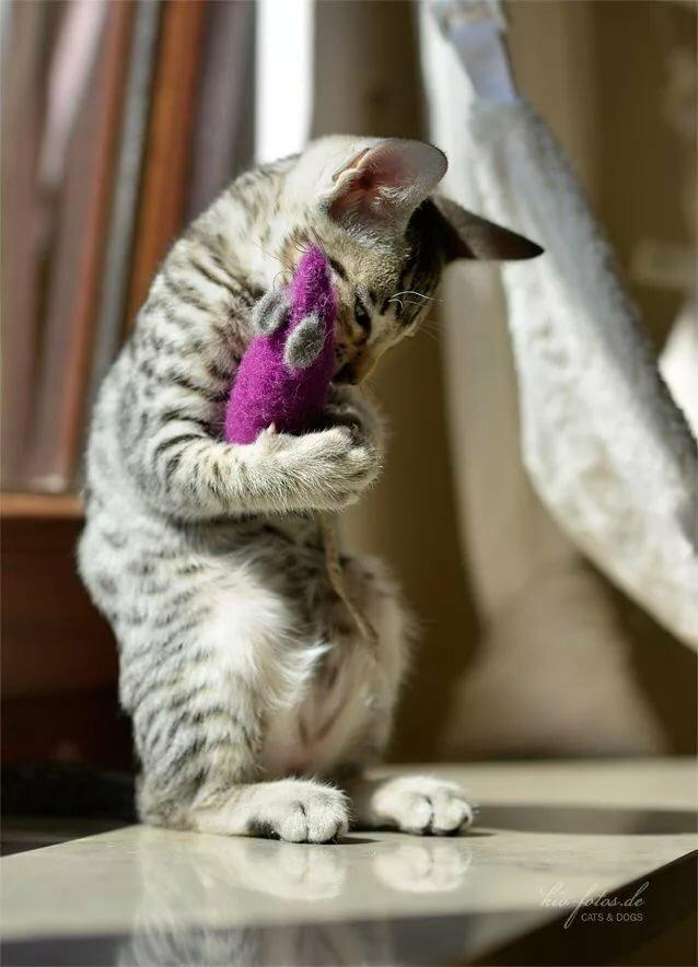 картинка я обиделась котенок юности светлана