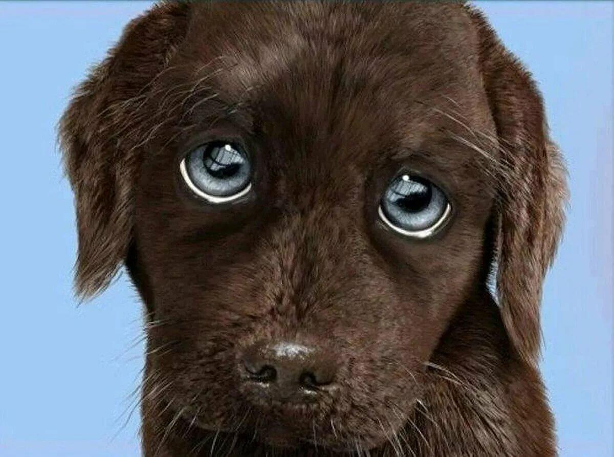 Картинка собака просящая