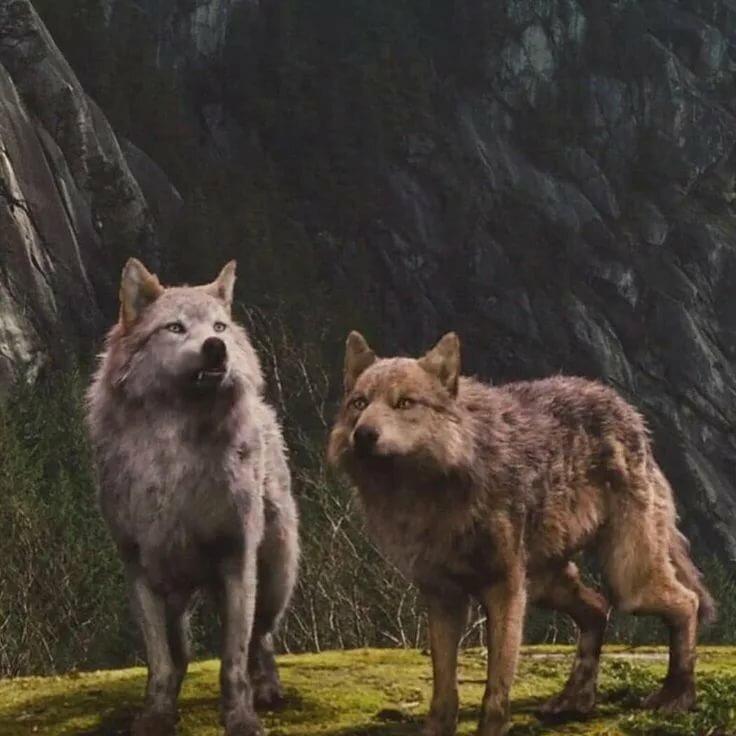 Волк кино картинка