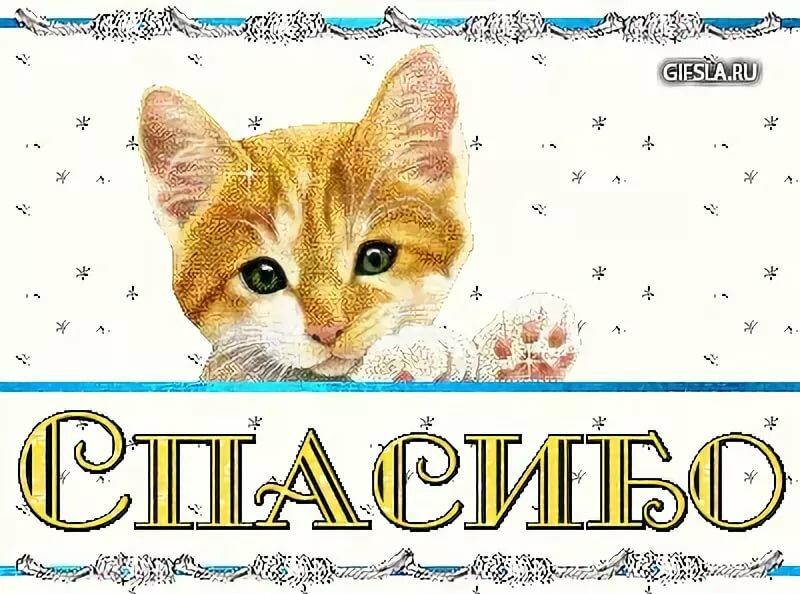 восточному фен-шую, картинки анимашки спасибо с кошками поздравлениями женщинам военным