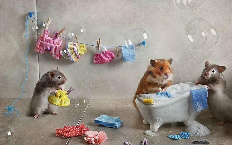 картинки из жизни мышек модели слишком