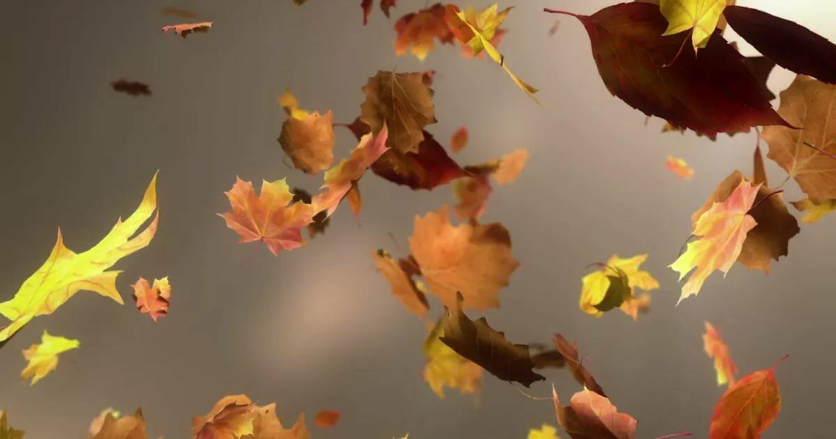 картинки осень листья падают красивые картинки