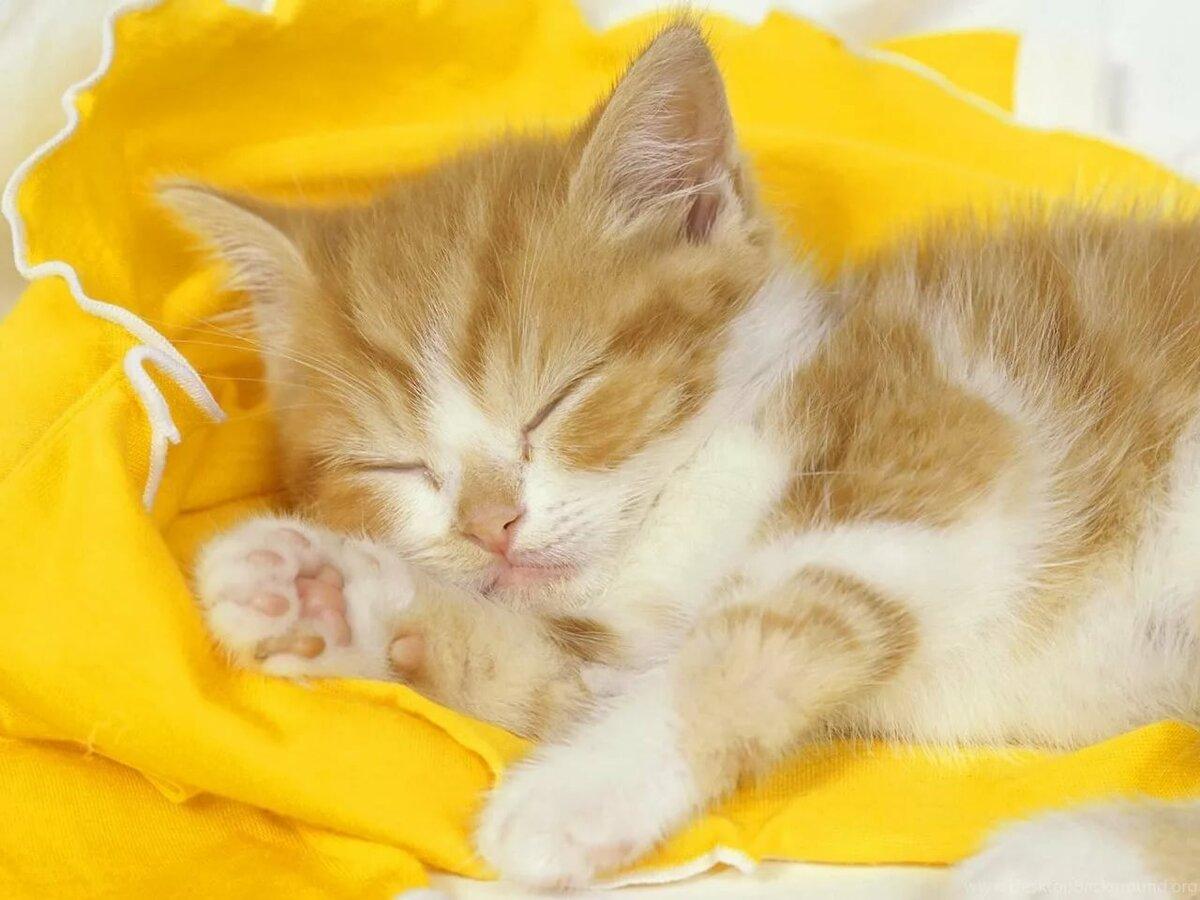 Февраля, спокойной ночи кошки открытки