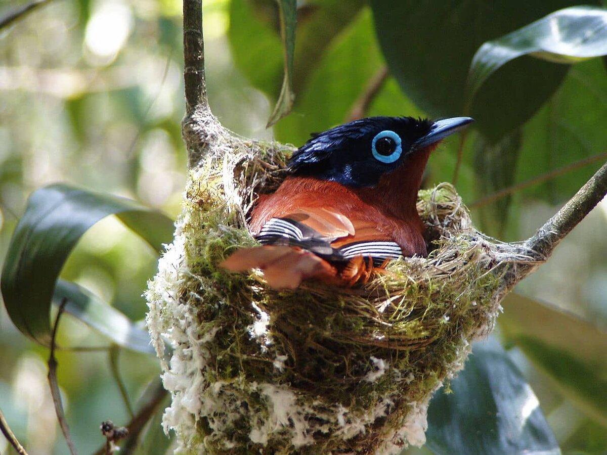 мадагаскарские птицы фото поздравить наш