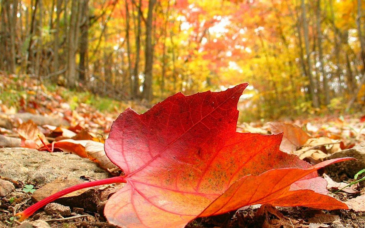 Осенние картинки про октябрь на аву смотреть