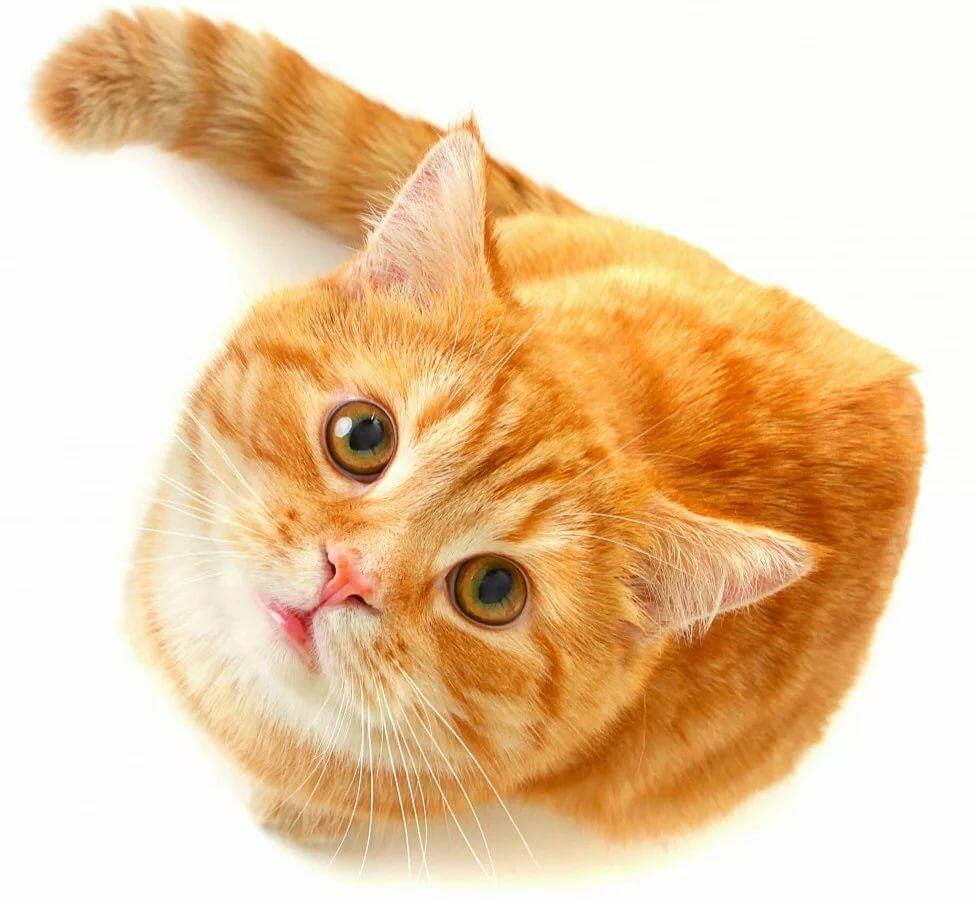 Спокойной, картинки с праздником кошек