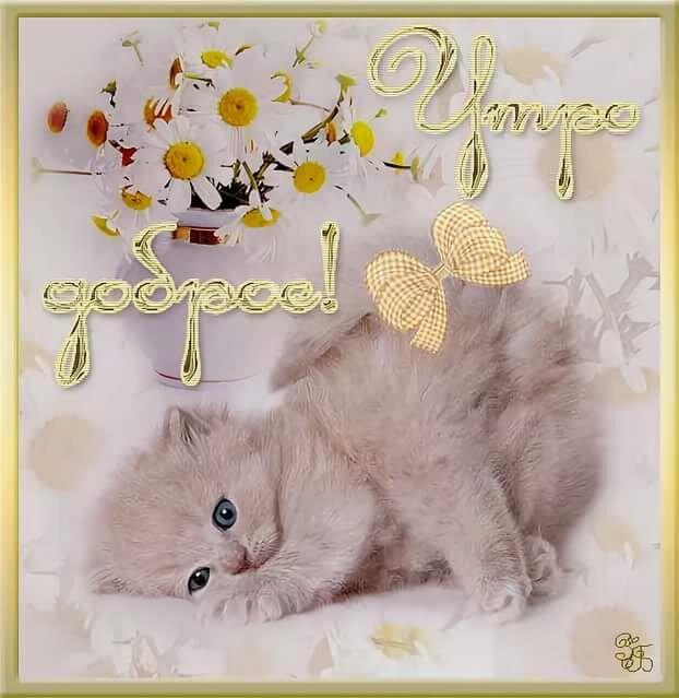 его особенностей картинка доброе утро с котятами с настоящими котятами высокого качества лучшей