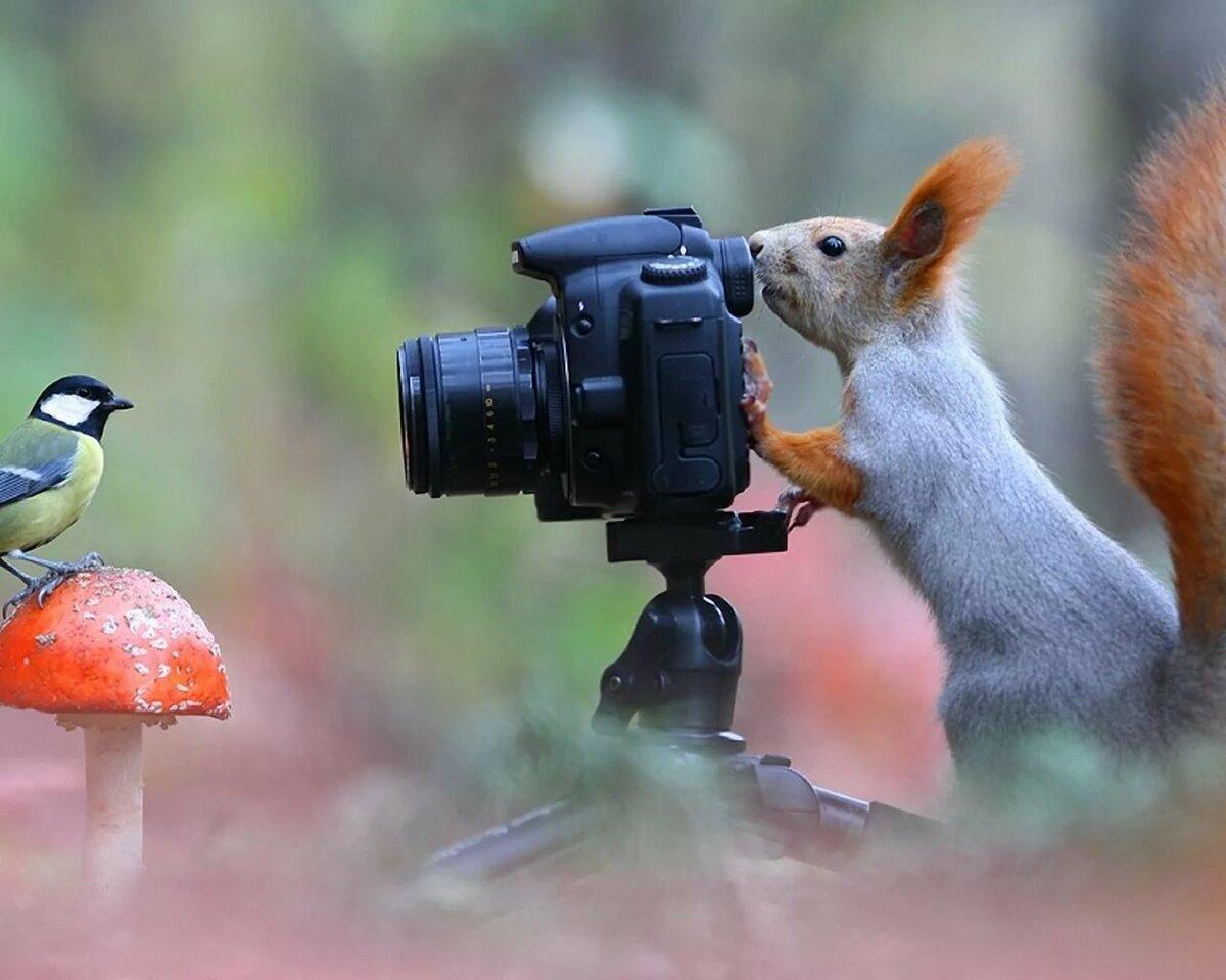 повышенным фотоохота на птиц объективы вас