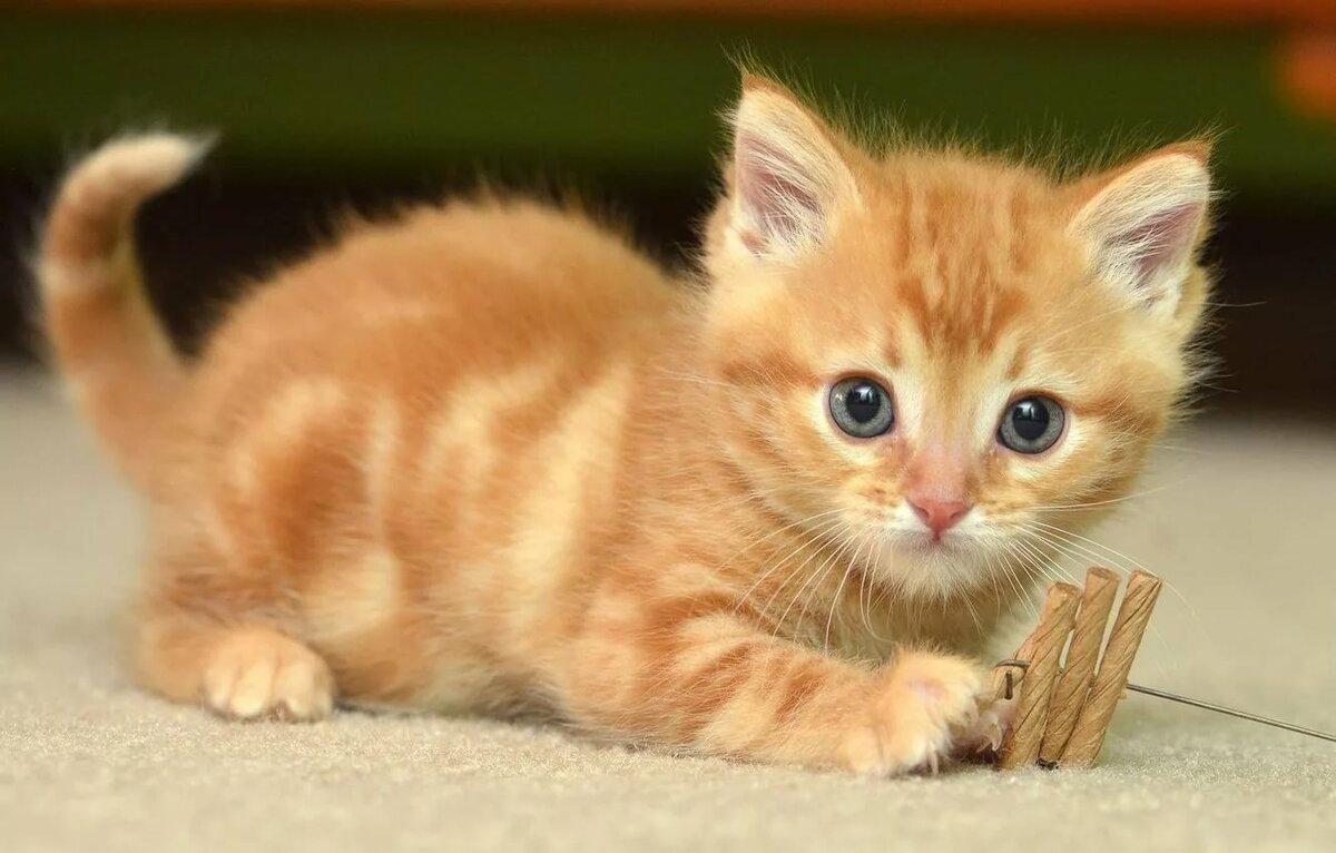 Картинки с котятами рыжими, картинки животных картинки