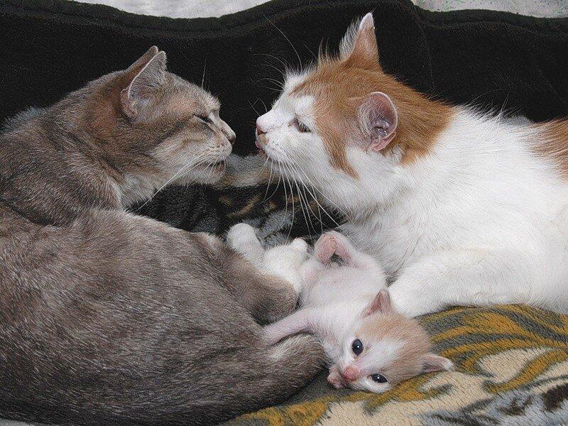 Открытки, картинки прикольные про любовь с животными с надписями