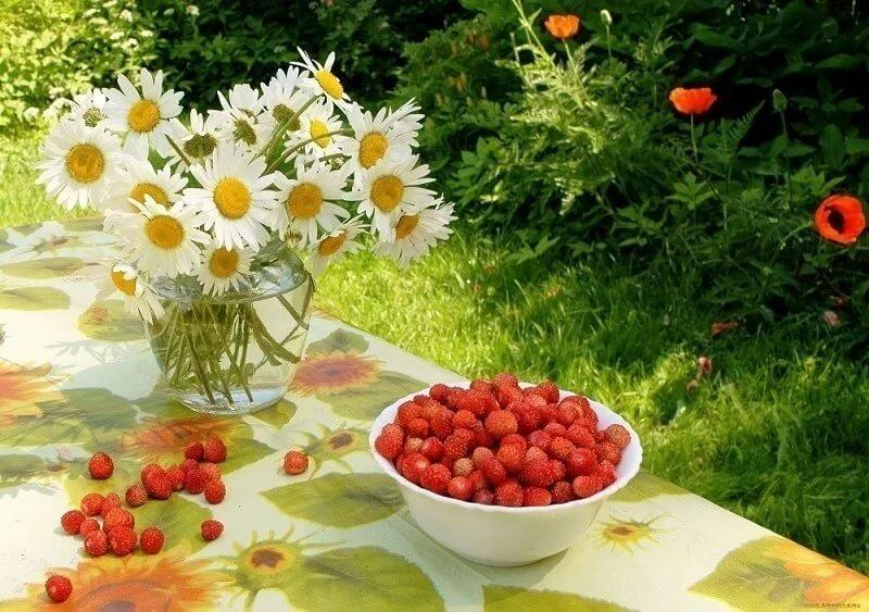доброе утро цветущий июнь картинки которые