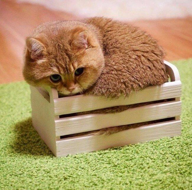 Картинки коты в коробке, открытки днем рождения