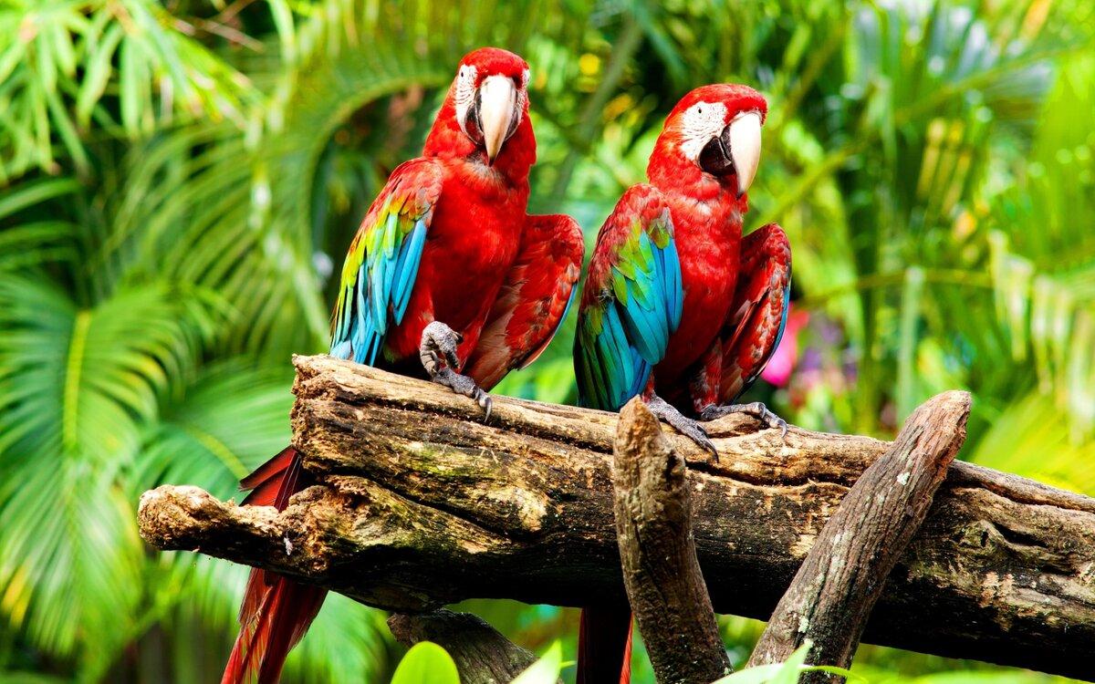 картинки попугаев джунглях старины отыскали