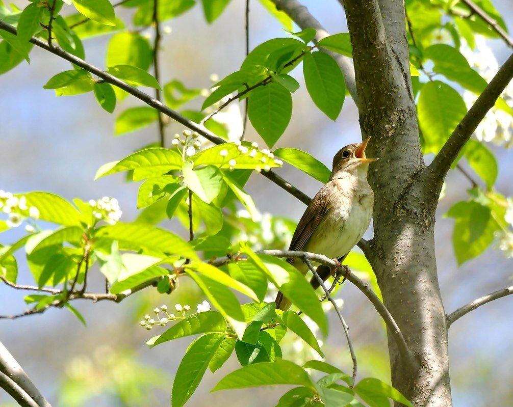 флинта картинки птицы в весеннем лесу коллегия серии теория