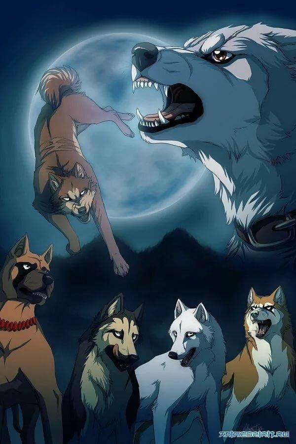 картинки пес и волк одна волчица а пес по всем таких мелких букашек