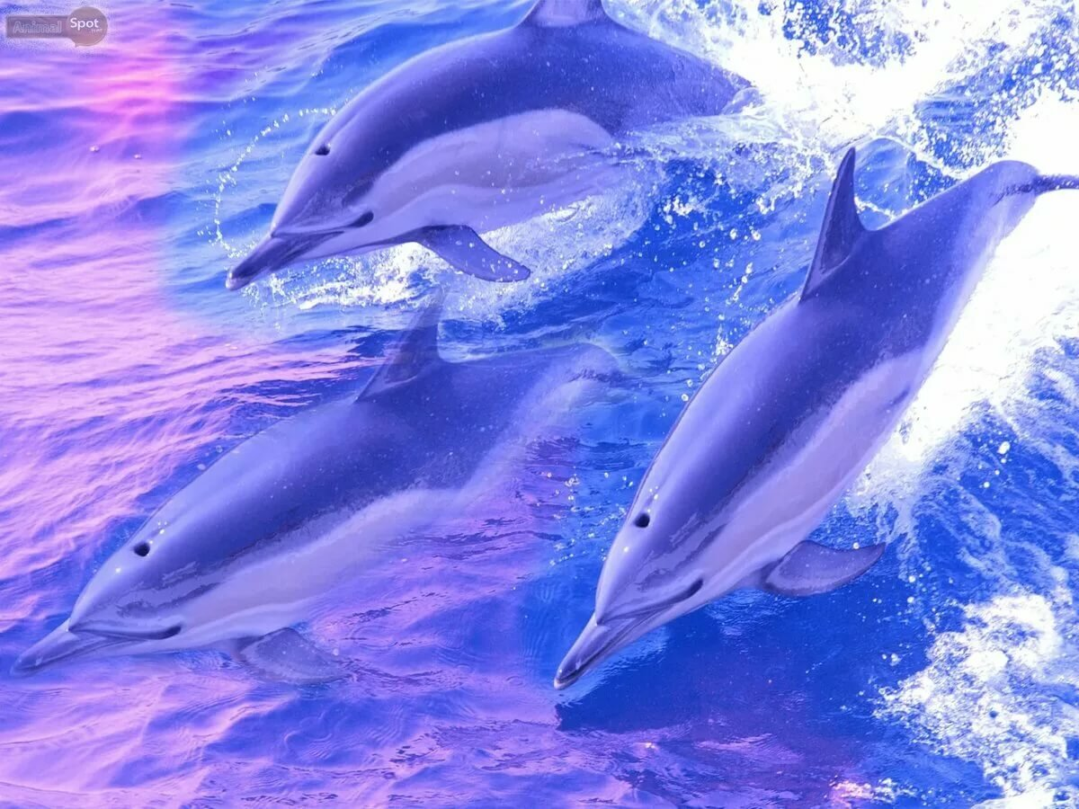 дельфины картинки ассоциации оплаты требуется