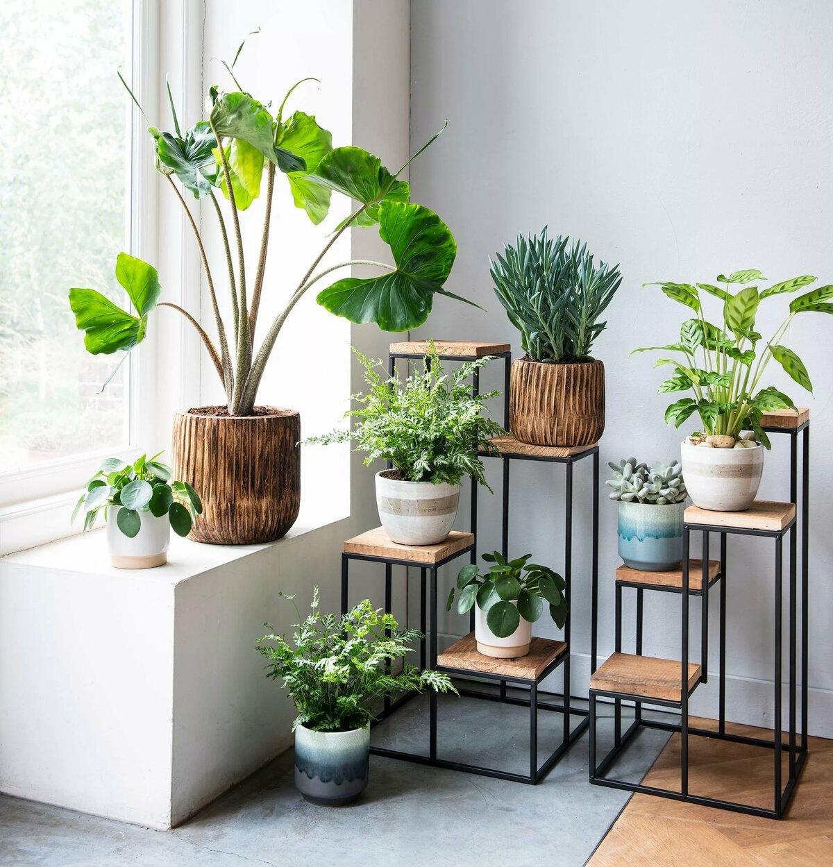 как расставить красиво растения дома фото притчу бедняке, который