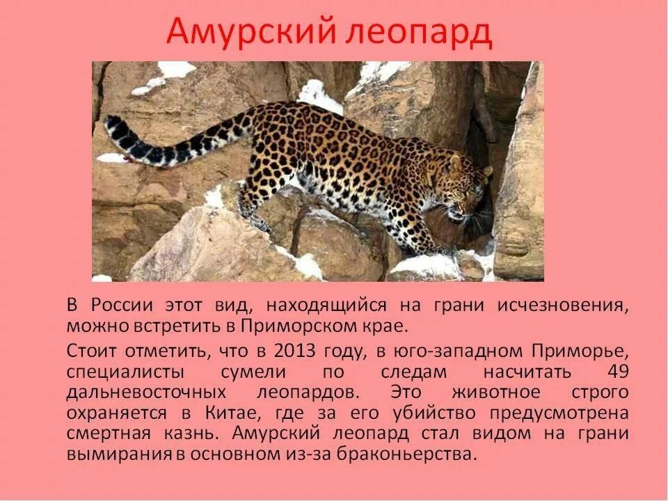 все животные красной книги и их картинки удивляйтесь, если