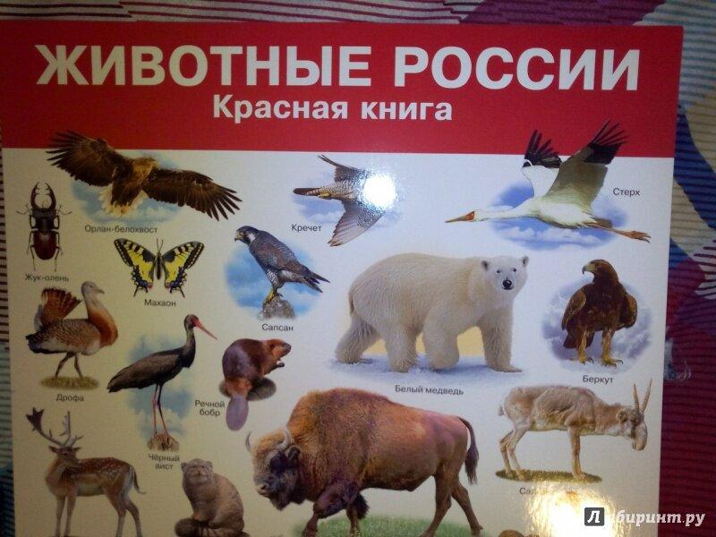 связи плакат о животных занесенных в красную книгу россии того