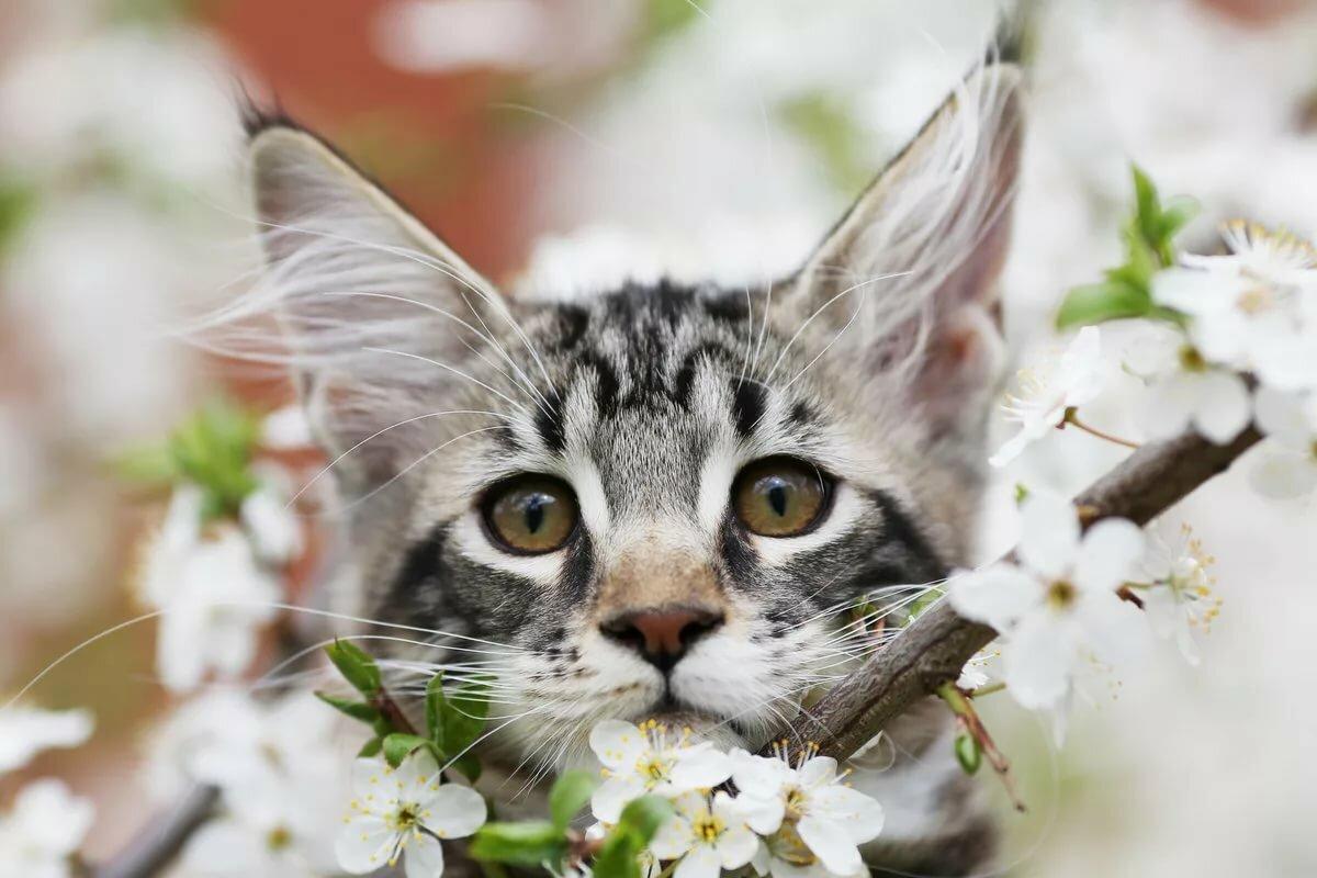 Котенок весной картинки