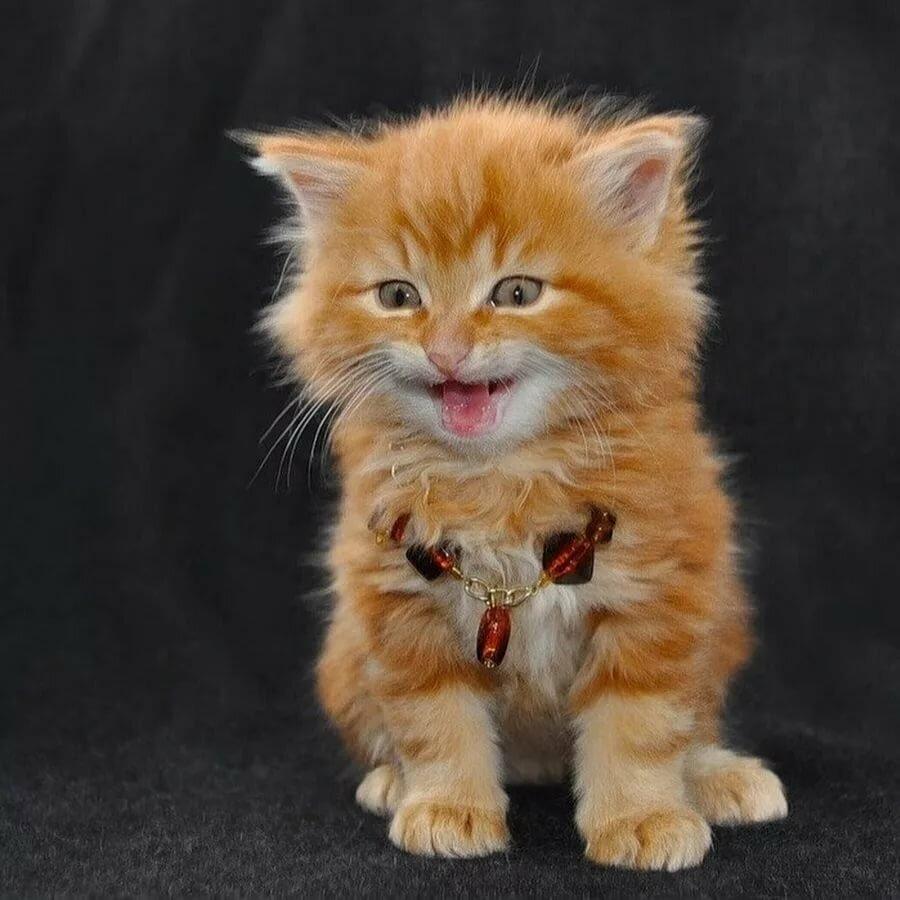 Шкодный кот картинка